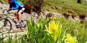 Tremalzo Big Tour: MTB cycle path in Val di Ledro